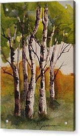 Birch Acrylic Print by Marilyn Jacobson