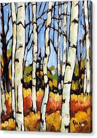 Birch Study By Prankearts Acrylic Print by Richard T Pranke
