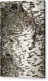Acrylic Print featuring the photograph Birch Tree Bark by Christina Rollo
