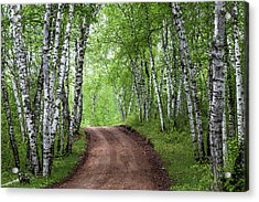 Acrylic Print featuring the photograph Birch Tree Forest Path #3 by Patti Deters