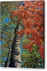 Birch Tree - Minister's Island Acrylic Print