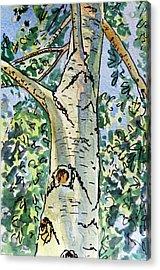 Birch Tree Sketchbook Project Down My Street Acrylic Print by Irina Sztukowski