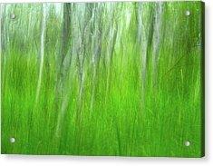Birch Tree Summer Dream Acrylic Print by Juergen Roth