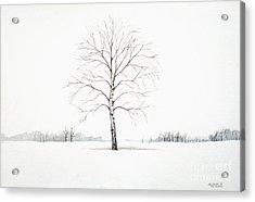 Birch Tree Upon The Winter Plain Acrylic Print
