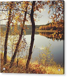 Birch Trees And Reflected Autumn Colors Acrylic Print by Stefan Mendelsohn