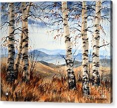 Birch Trees At Crawford Notch -1 Acrylic Print by Varvara Harmon