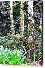 Birch Trees In London Acrylic Print by Mindy Newman
