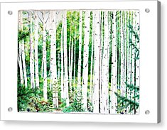 Birch Trees Acrylic Print by Jennifer Apffel
