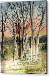Birch Trees On Canvas Acrylic Print