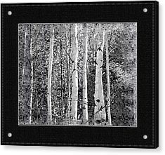 Acrylic Print featuring the photograph Birch Trees by Susan Kinney
