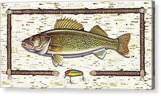 Birch Walleye Acrylic Print by JQ Licensing