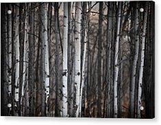 Birches Acrylic Print by Diane Dugas