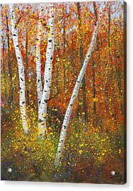 Birches Acrylic Print by Garry McMichael