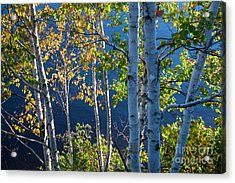 Acrylic Print featuring the photograph Birches On Lake Shore by Elena Elisseeva
