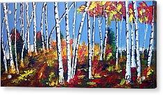 Birches Acrylic Print by Paul Sandilands