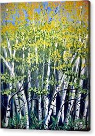 Birches Acrylic Print by Sharon Marcella Marston