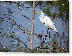 Bird 154 Acrylic Print