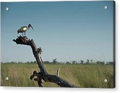 Bird Acrylic Print