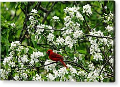 Bird And Blossoms Acrylic Print