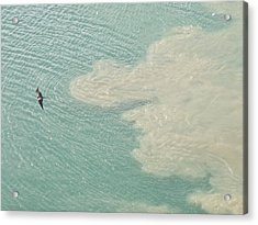 Bird And Churning Sand Acrylic Print