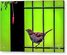 Bird And Red Fuchsia Flower Acrylic Print