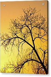 Bird At Sunset Acrylic Print by James Steele