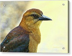Acrylic Print featuring the photograph Bird Beauty by Deborah Benoit