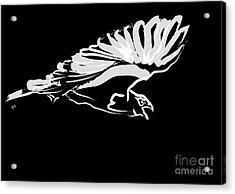 Bird Buzzard  Acrylic Print