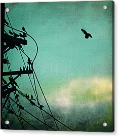Acrylic Print featuring the photograph Bird City Revisited by Trish Mistric