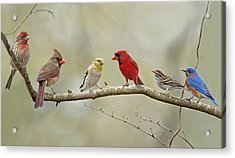 Bird Congregation Acrylic Print by Bonnie Barry