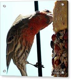 Bird Hits The Jackpot Acrylic Print