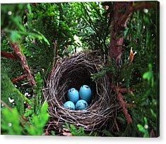 Bird Home Acrylic Print by Shirley Sirois