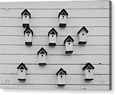 Bird Houses Acrylic Print