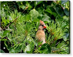 Acrylic Print featuring the photograph Bird In A Tree 2 by Paul SEQUENCE Ferguson             sequence dot net