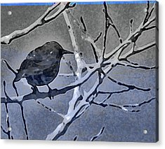 Bird In Digital Blue Acrylic Print