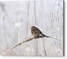 Bird In First Frost Acrylic Print