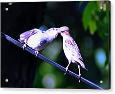 Bird Kiss Acrylic Print by Bill Cannon