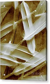Bird-less Of A Feather Acrylic Print by Jorgo Photography - Wall Art Gallery