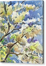 Bird Nest In The Catalpa Blooms Acrylic Print by Spencer Meagher