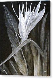 Bird Of Paradise Black And White Acrylic Print