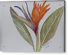 Acrylic Print featuring the painting Bird Of Paradise by Donna Walsh