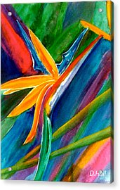 Bird Of Paradise Flower #66 Acrylic Print by Donald k Hall