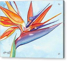 Bird Of Paradise IIi Acrylic Print by Marionette Taboniar