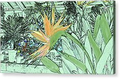 Acrylic Print featuring the photograph Bird Of Paradise In The Hothouse by Nareeta Martin