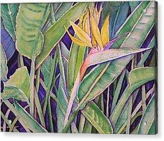 Bird Of Paradise Acrylic Print by Laurie Balla