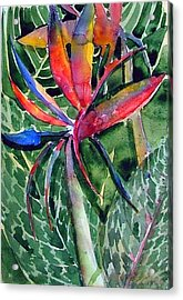 Bird Of Paradise Acrylic Print by Mindy Newman