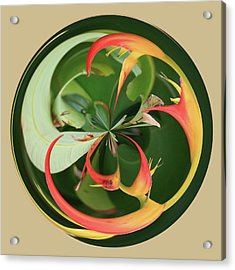 Bird Of Paradise Orb Acrylic Print by Bill Barber