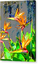 Bird Of Paradise Acrylic Print by Scott K Wimer