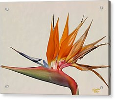 Bird Of Paradise With White Background Acrylic Print