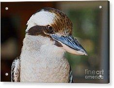 Bird Of Prey Acrylic Print by A New Focus Photography